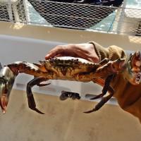 Drop a crabpot!