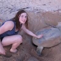 Giant flatback turtle nesting